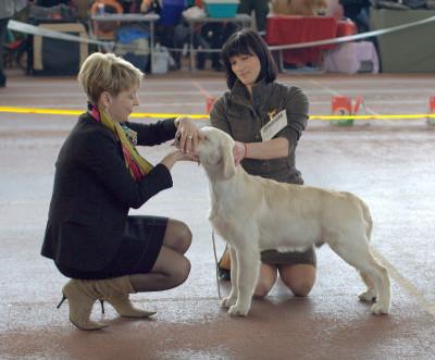 Анжелонато Посейдон Визкаталеяголд (Беларусь) Большая перспектива 1 место, лучший беби породы