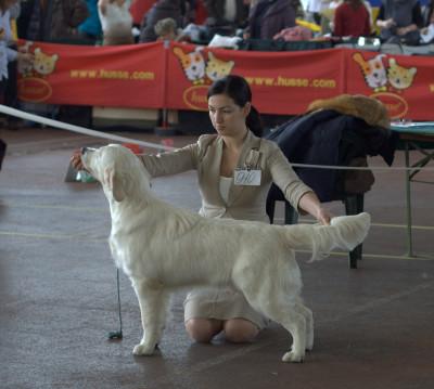 RIERA CERTRERO SALVADOR (Россия) Большая перспектива 1 место Большая перспектива, лучший щенок кобель