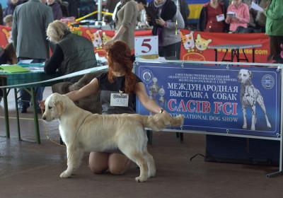 Антарес Ластер Голд (Беларусь)- Большая перспектива, Лучшая щенок сука, лучший щенок породы