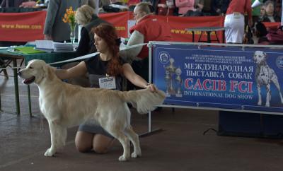 Сан Блис Брико (Беларусь)- Отлично 1 место, лучший юниор кобель, лучший юниор породы