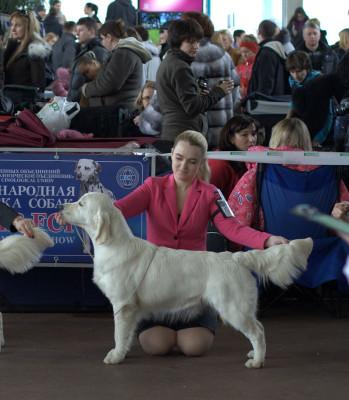 Ладвил Вивьен- ли Виваче (Россия)- отлично 1 место, САС, лучшая сука юниор, лучший юниор породы.