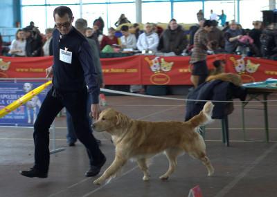 AMBERGOLD DZHI KEY FELICITY TO WIN  (Беларусь)- отлично 2 место