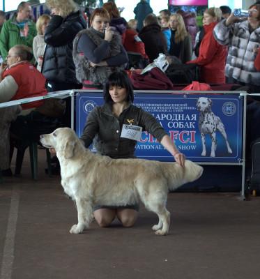 Анита (Беларусь)- отлично 1 место, лучший ветеран породы.