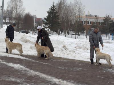 . Важно научить его спокойно стоять в присутствии других собак.