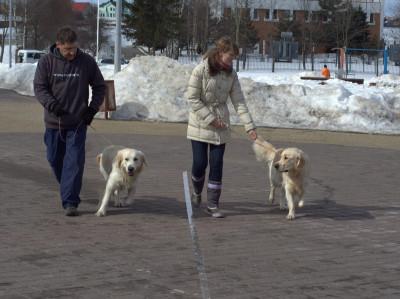 Если успокоить собаку не получается, можно попробовать метод подражания.