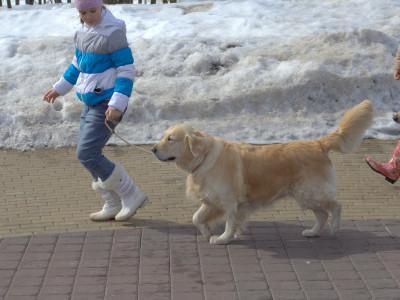 Собака должна двигаться в одном темпе с хэндлером,
