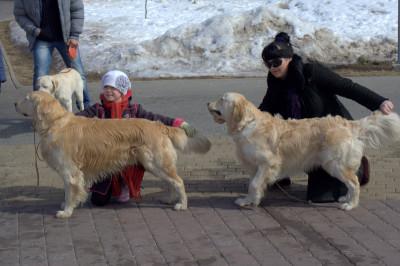 Всегда помните, что при выставлении собаки в ручной стойке, важно сначала зафиксировать голову