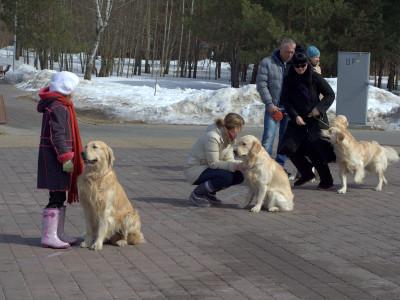Если ваша собака отвлекается на других собак и рвется к ним, то походите вокруг них на коротком поводке с вашей собакой.