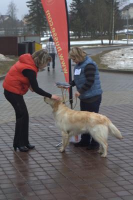 Не смотря на то, что эта собака уже имеет чемпионский титул, хозяева продолжают посещать наши занятия