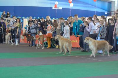 Где дети в возрасте до 10 лет демонстрировали навыки выставления собак