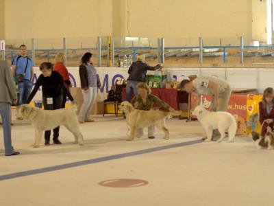 Республиканская выставка ретриверов и спаниелей ОО Новополоцкого клуба собаководства
