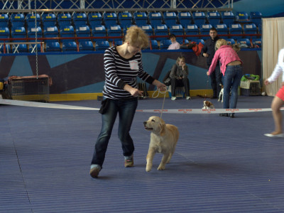 Республиканская выставка собак всех пород клуб Сириус 2 место класс беби