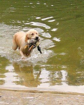 Есть! Выход из воды с крутым подъемом. Подача выполнена правильно.