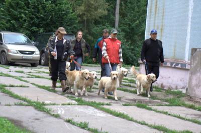 26 июля состоялись испытания по подаче битой дичи. Хотя все собаки пробовали подавать дичь, хозяева заметно волнуются за своих питомцев: как покажут свои навыки их питомцы?