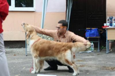 Onika Streizy Almay Dog - отлично 1 место САС