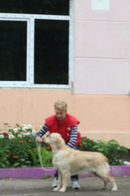 VALENCIA SOLAR -  большая перспектива, 1 место,  лучший щенок сука,  лучший щенок породы