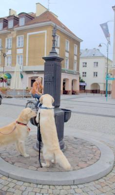 Еще один источник в центре города обнаруженный нашими питомцами. Колонка с водой. В Польше они часто встречаются на улицах