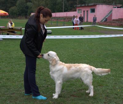 Ар Винг Вланти Делимар- большая перспектива, лучший щенок кобель.