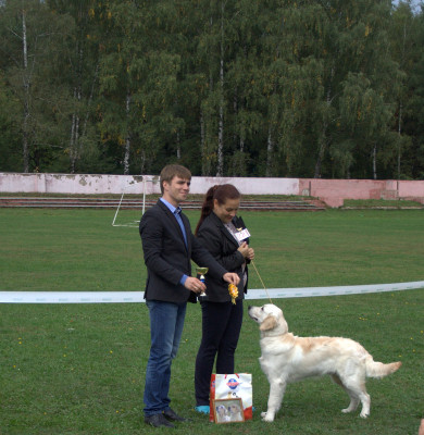 Ар Винг Вланти Делимар- большая перспектива, лучший щенок породы.