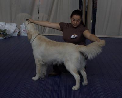 Вей Гранд-лучший щенок породы