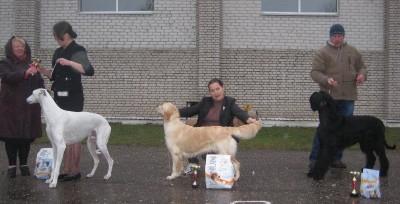 Золотой Охотник Барбара Стрейзи 2  место за звание лучшая собака выставки