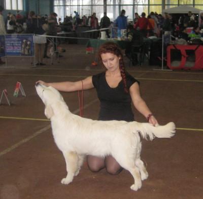 SKANDI SANRAIZ GEKATA FOR ANGELONATO (Беларусь)- большая перспектива, лучшая щенок сука, лучший щенок породы