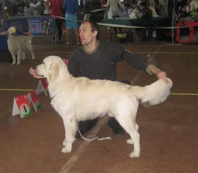 Анжелонато Посейдон Каталеяголд (Беларусь)- отлично 1 место, лучший юниор кобель, лучший юниор породы
