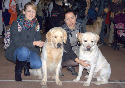Республиканская выставка собак всех пород 17 ноября 2013 года