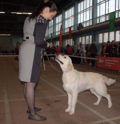 Атрей Форби Вланти Делимар - Большая перспектива, лучший щенок кобель, лучший щенок  породы.