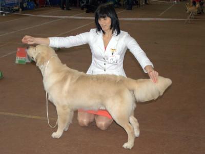 Даниэль Каталея Голд Большая перспектива 1 место, лучший щенок кобель, лучший щенок породы