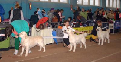 Слева направо: Дарлингтон Мое Сокровище (Беларусь), RIERA CERTERO SALVADOR (Россия), Анжелонато Лофант (Беларусь)
