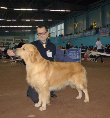 AMBERGOLD DZHI KEY FELICITY TO WIN  (Беларусь)-  отлично 1 место САС