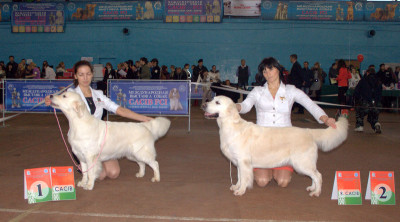 Слева направо: RIERA DOMENIKA (Россия)- отлично 1 место САС, САСIB  Бланка Мое Сокровище (Беларусь) отлично 2 место R.CACIB