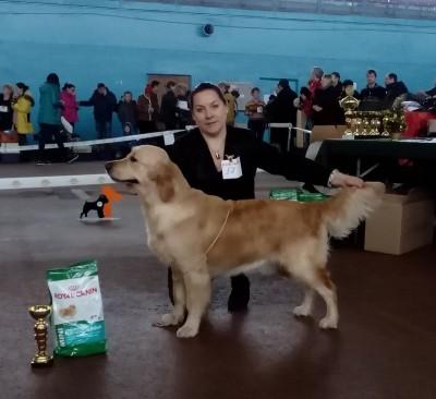 8 декабря 2013 года, в Минске состоялась выставка, в которой приняли участие боле 30 собак породы Голден ретривер. Экспертизу проводила эксперт международной категории Малгажата Супрунович (Польша). Собаки нашего питомника участвовали в выставке и получили оценки эксперта.