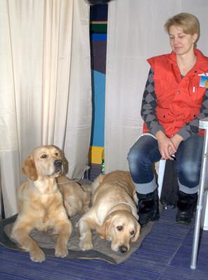 Золотистые ретриверы Валенсия Солар и Барбара Стрейзи со своей хозяйкой Мельниковой Ольгой знакомят посетителей выставки с породой и демонстрируют выдержку и послушание.