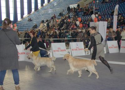 """Республиканская выставка собак клуба """"Сириус""""1 февраля 2014"""