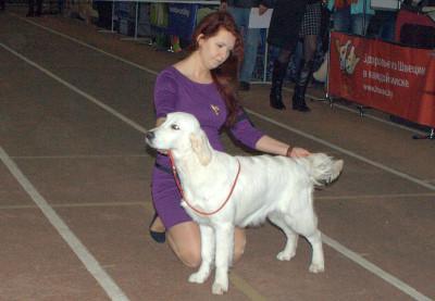 Анжелонато Олив Блоссом (Беларусь)- большая перспектива, лучшая щенок сука, лучший щенок породы