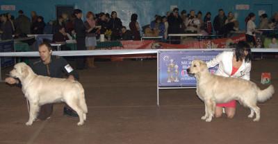 Слева направо: ANGELONATO POSEIDON CATALEYAGOLD (Беларусь), Емерион Мое Сокровище (Беларусь)