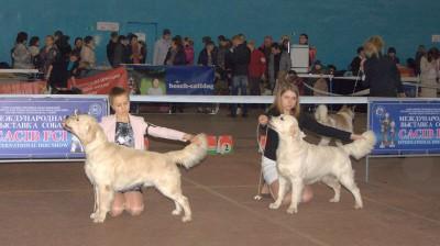 Слева направо: RICHI GOLDEN ARISTOKRAT (Россия), RIERA CERTERO SALVADOR (Россия)