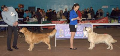 Слева направо: AMBERGOLD DZHI KEY FELICITY TO WIN  (Беларусь), CANTRYGOLD CELESTIN AURELIY (Россия)