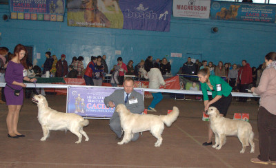 Слева направо: ANITA MY WINGS (Беларусь), NORTHSTREAM AMELIYA MERI ERKHART (Россия), USLADA IZ SOKOLINOGO GNEZDA (Россия)