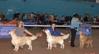 Слева направо: AMELI SMILE ODRI TOTU (Россия), KANTRI GOLD SHARADA RUS (Россия), LEYLA GOLDEN REIN (Россия)