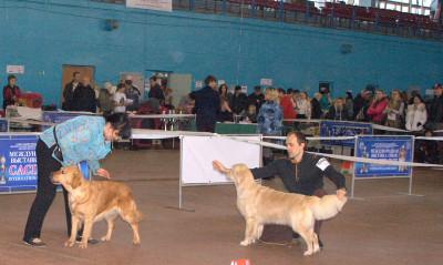 Слева направо: LEYLA GOLDEN REIN (Россия), SANIRA (Беларусь)
