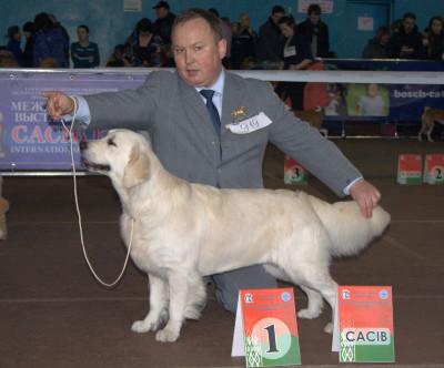 лучшая сука породы, САСIB - NORTHSTREAM AMELIYA MERI ERKHART (Россия)