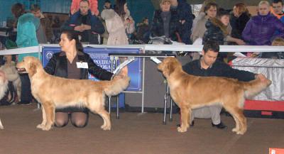 Слева направо: VALENCIA SOLAR (Беларусь)VIVA GINGER (Беларусь)
