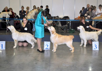 Расстановка на лучшего щенка суку:  1 - ASHBURU INDIANA-JONES, 2- Жульет Ле Рев, 3 - EVIDOG SAVOY