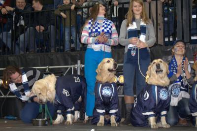 А вот и подарки. У каждой собаки есть миска, но далеко не у каждой она с логотипом любимой команды хозяев!
