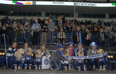 Золотистые победители фотоконкурса хоккейного клуба Динамо.