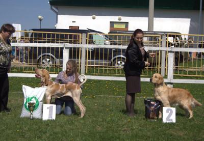 Валенсия Солар - 2 место за звание лучший юниор Чемпионата подружейных собак