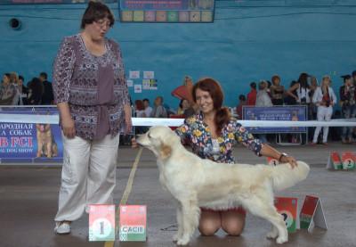 Лучший представитель породы: KANRIT DALI MARGHERITA D ORO (Беларусь)